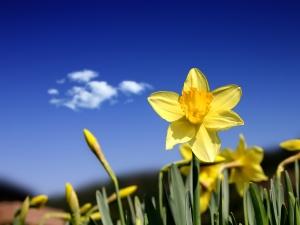 Think Spring!